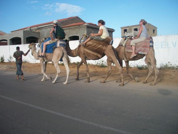 camel-jockeys